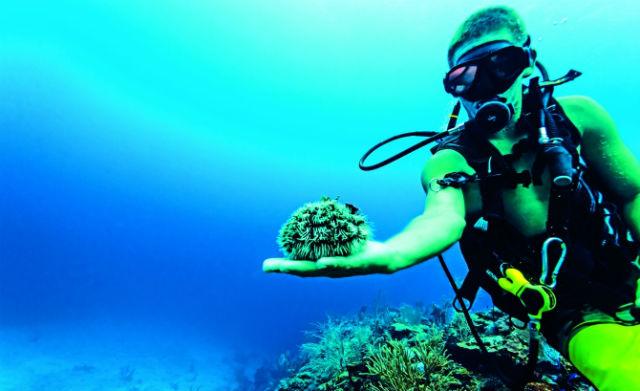 Το δεύτερο μεγαλύτερο κοραλλιογενές φράγμα του κόσμου