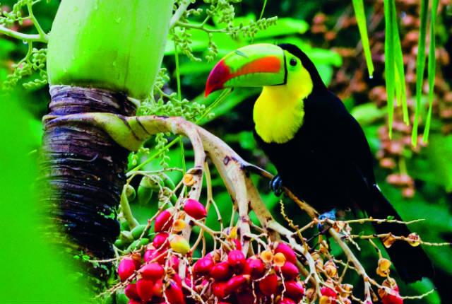 Σπάνια είδη ζώων στην Μπελίζ