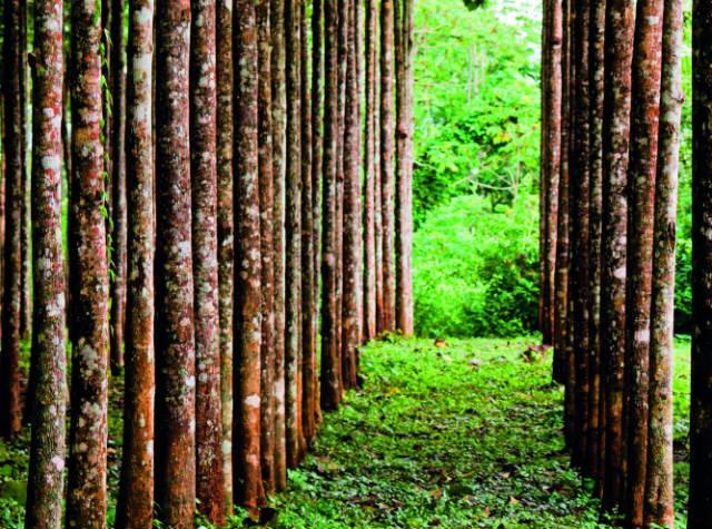 Μπελίζ δάση