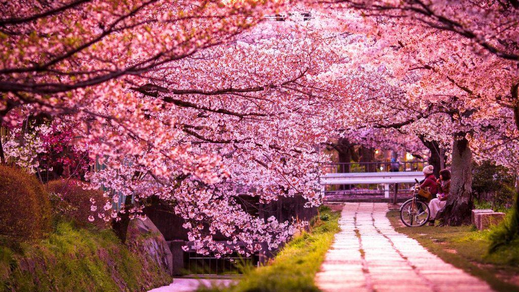 Κιότο Ιαπωνία ανθισμένες αμυγδαλιές
