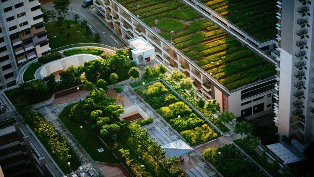 Πράσινες ταράτσες σε κτήρια του κόσμου