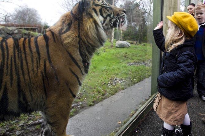 Ζωολογικός Κήπος Δουβλίνου