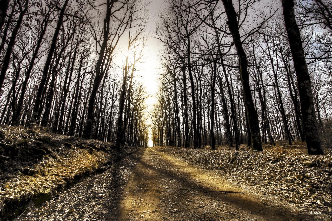 foloi-treesimg_9388_med