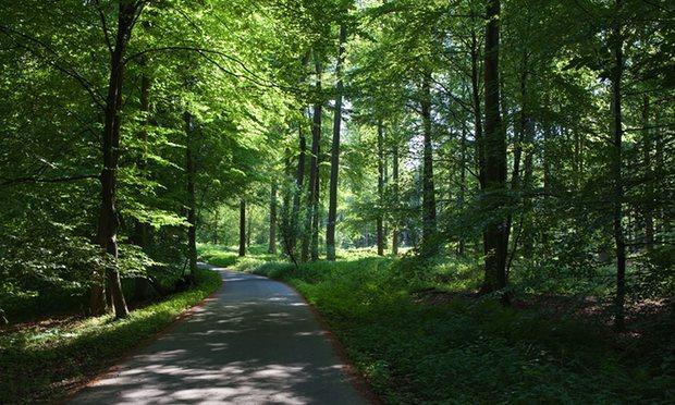 Forêt de Soignes Βρυξέλλες
