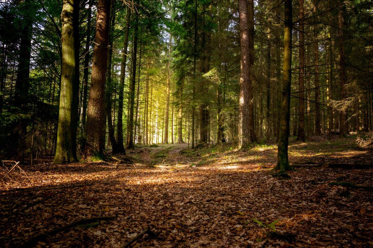 Bavarian forest  Γερμανία