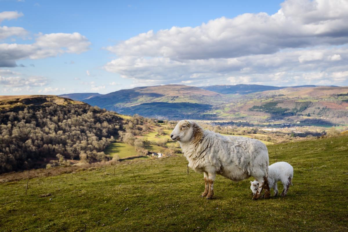 Brecon Beacons, Εθνικός δρυμός Ουαλία