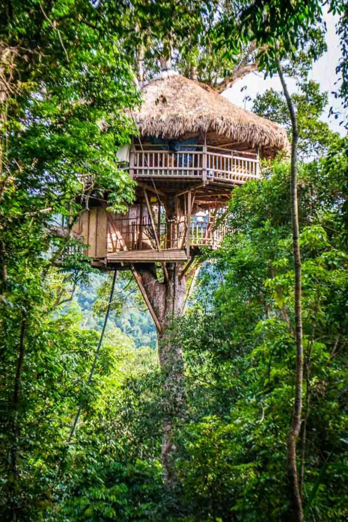 The Gibbon Experience Treehouse, Λάος