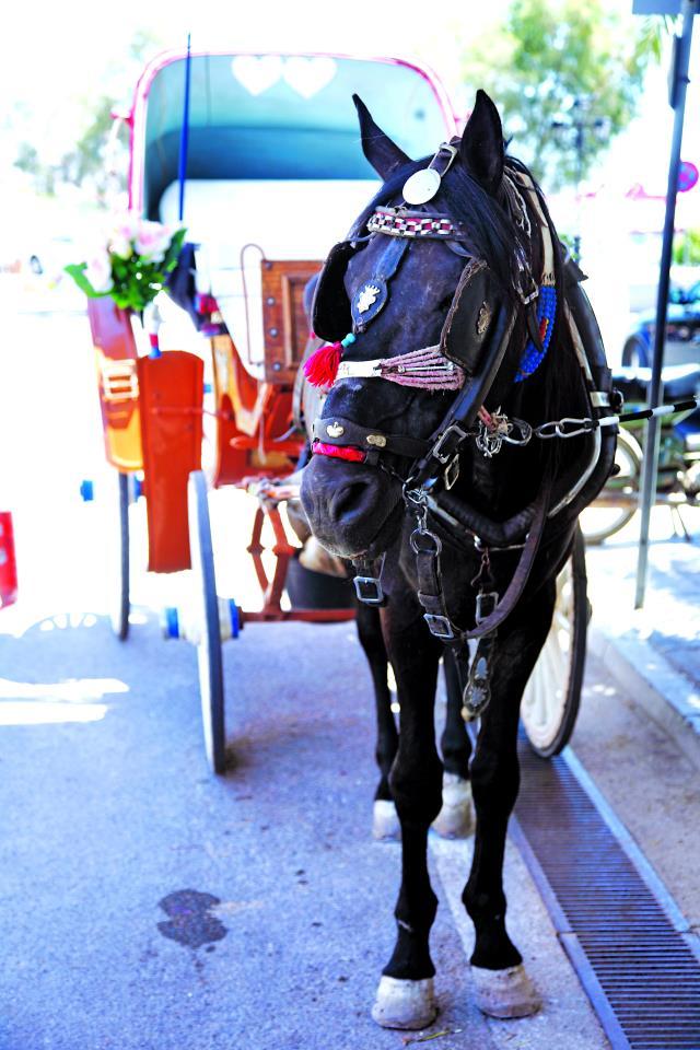 Αίγινα άλογα