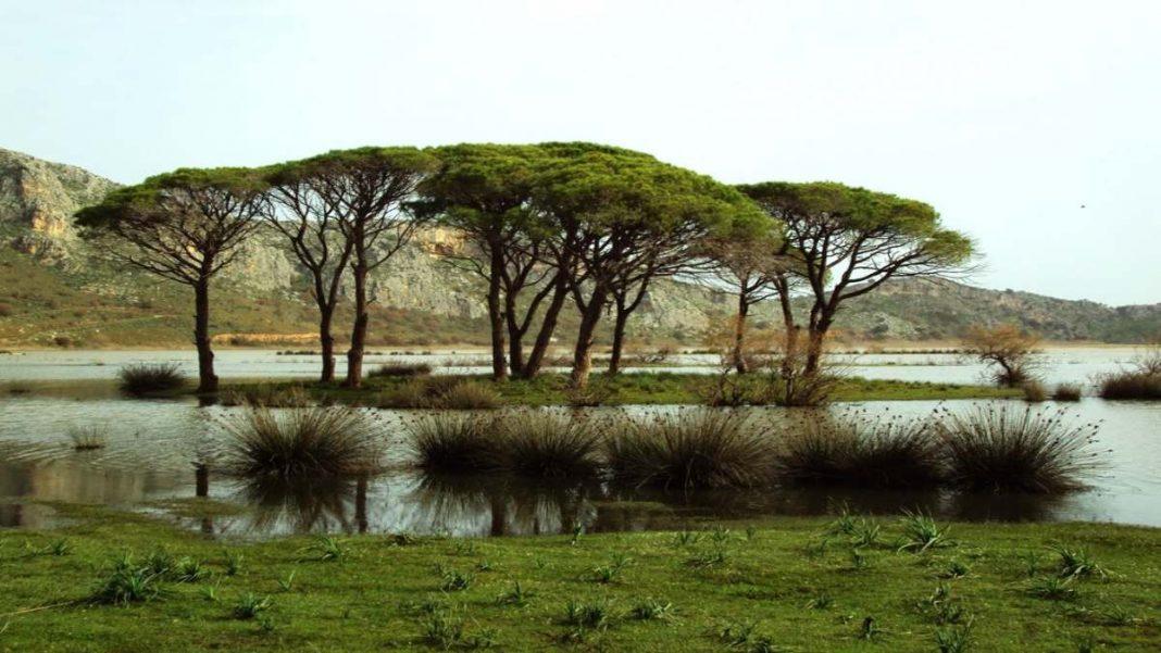 Δάσος Στροφυλιάς Πελοπόννησος