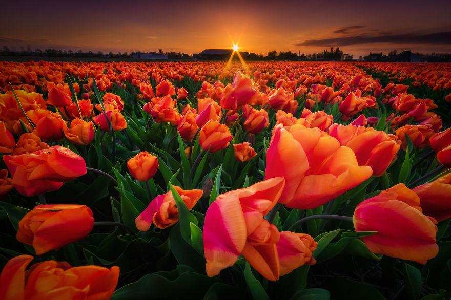 Ολλανδία: Το μεγαλείο της άνοιξης μέσα από 19 φαντασμαγορικές φωτογραφίες!