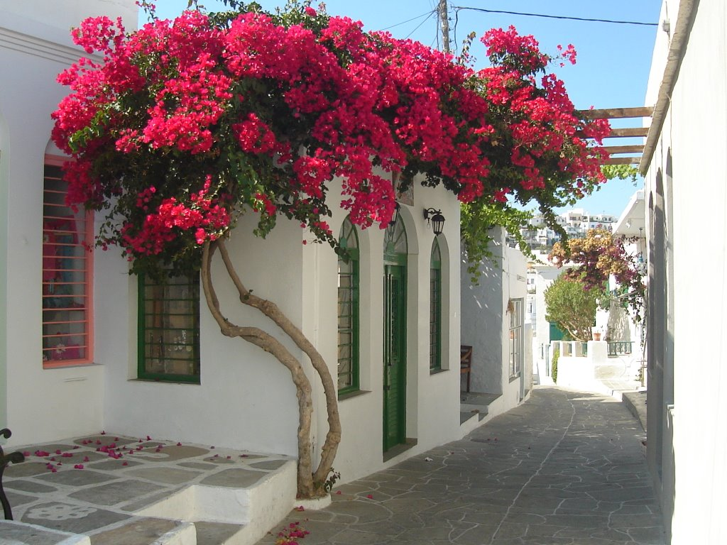 """Το """"διαμαντάκι""""του Αιγαίου,μια κουκλίστικη πόλη στην καρδιά των Κυκλάδων!"""