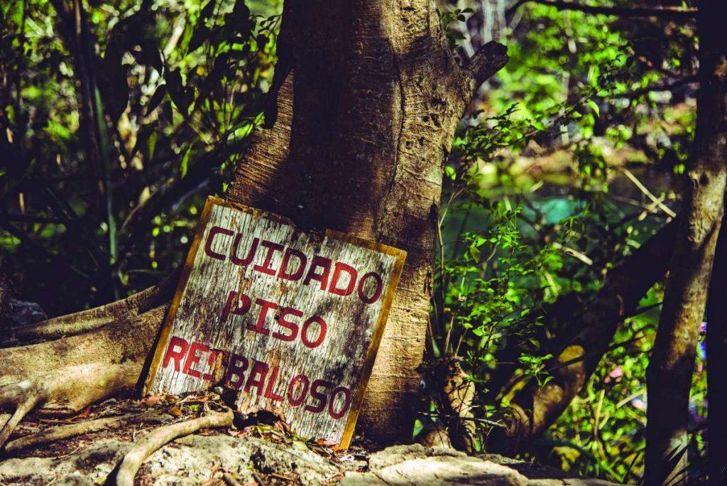 Cenote Jardin del Eden - Φύση