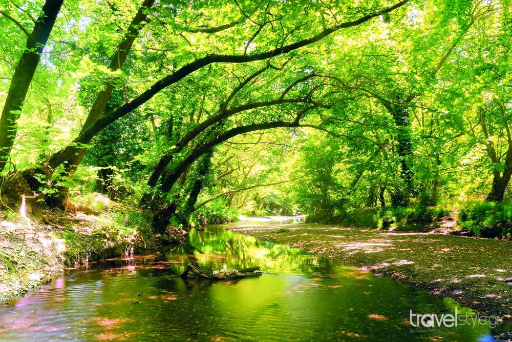 Δάσος Δρυμώνα, Εύβοια