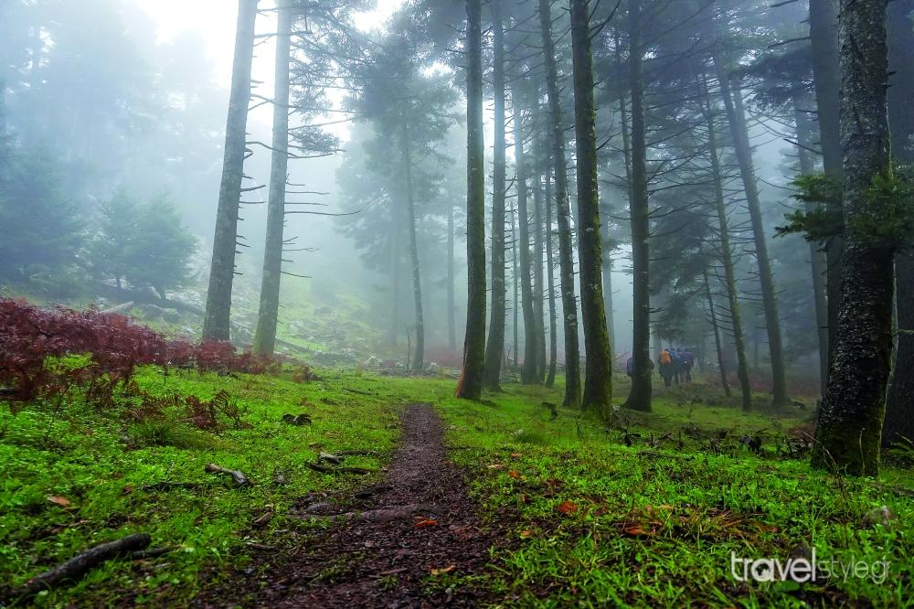 Δάσος, Εύβοια