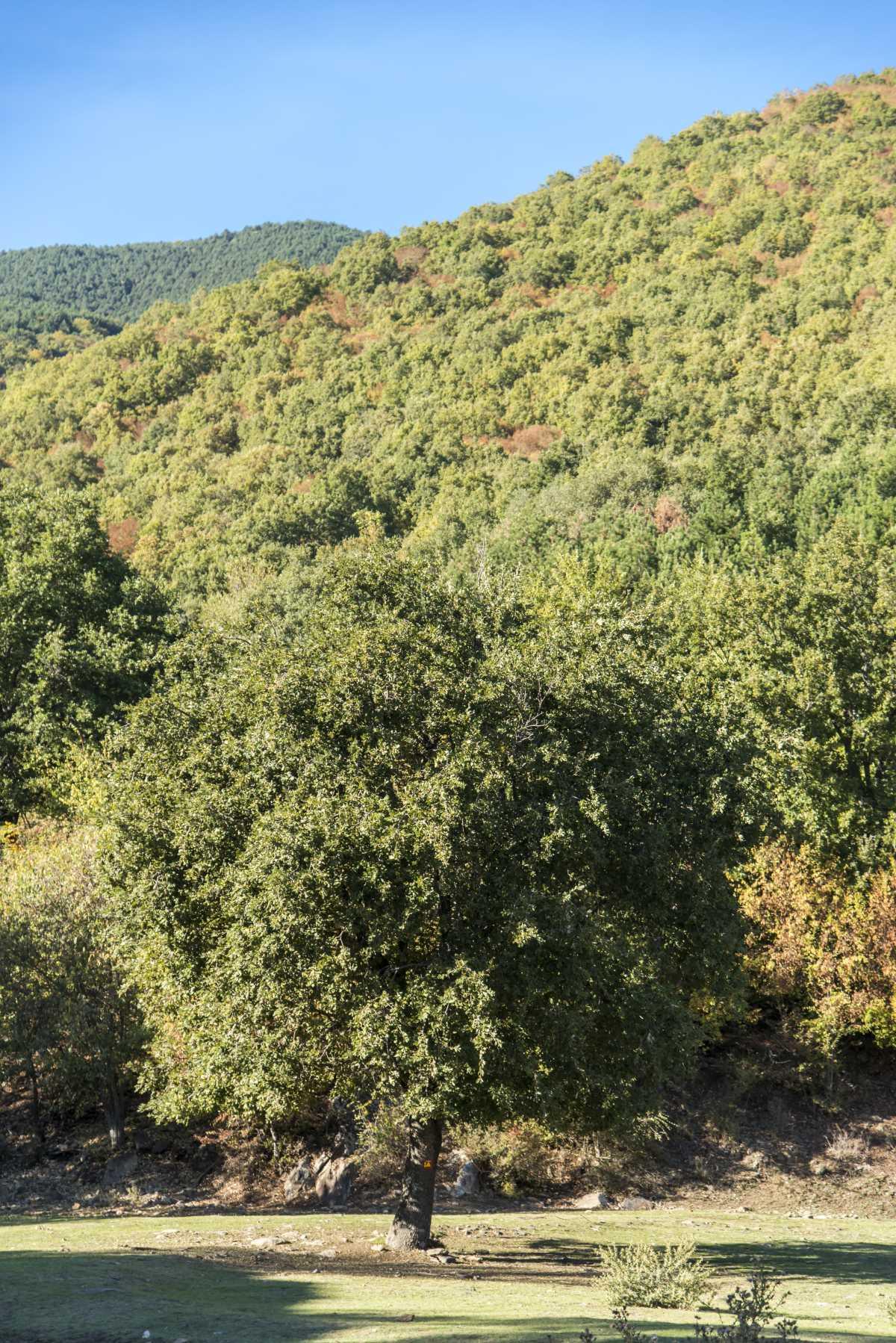 Η φύση στα  Άνω Πορόια, Σέρρες