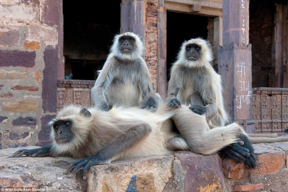 Το πραγματικό βιβλίο της ζούγκλας: Εκπληκτικές φωτογραφίες δείχνουν τα θαύματα της άγριας ζωής της Ινδίας!