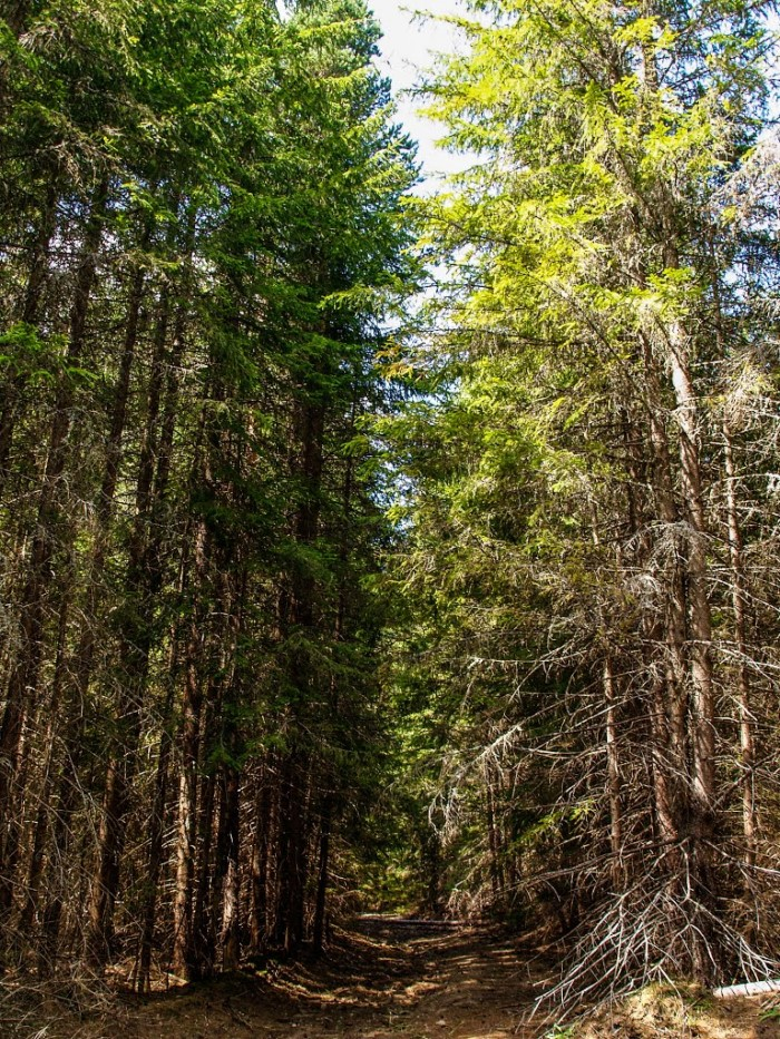 Το δάσος της Ελατιάς ή «Καράντερε»: Είναι ένα «αυθεντικό και ανεπανάληπτο μουσείο της φύσης»!