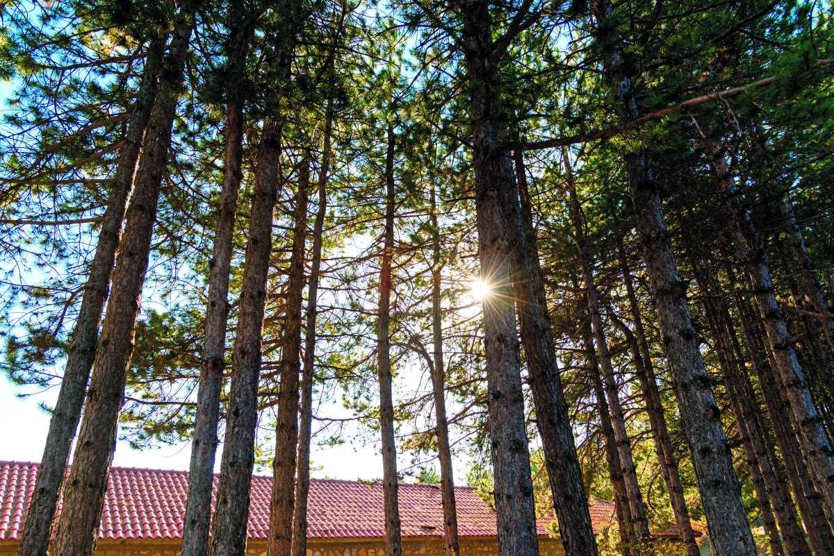 Παλαιός Άγιος Αθανάσιος, δάσος