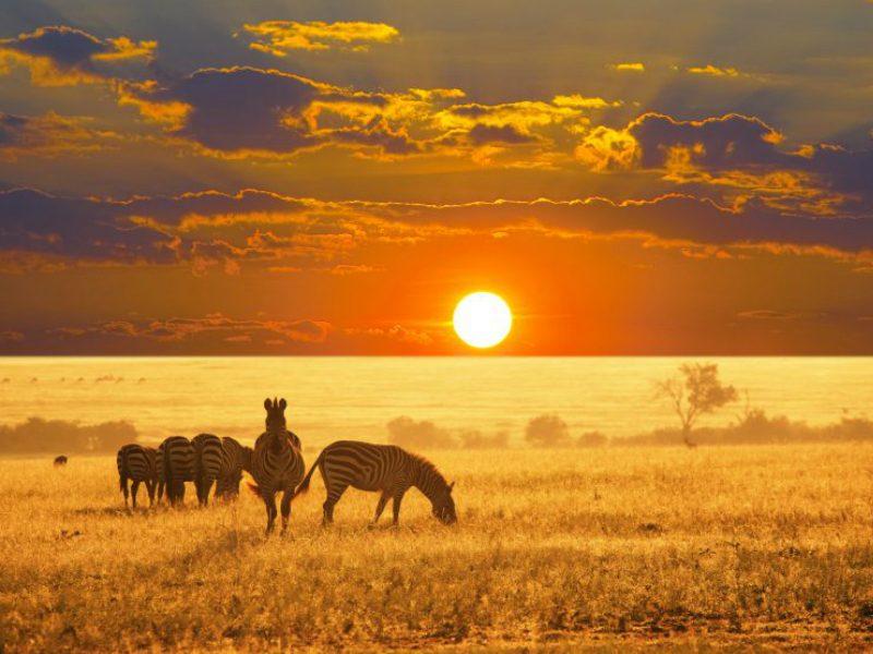 Ζέβρες στη Ναμίμπια