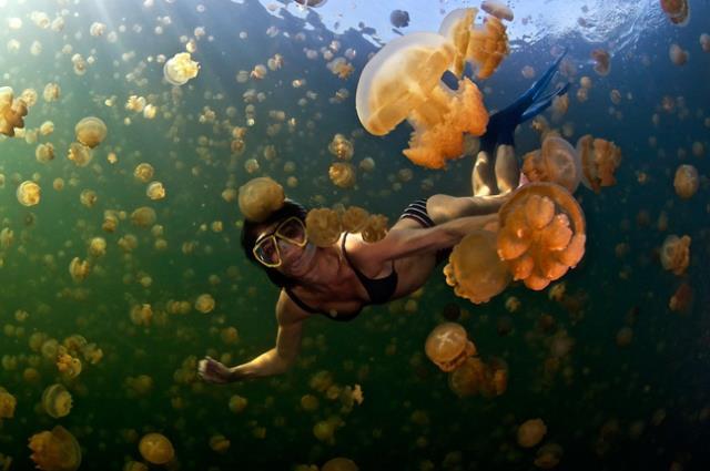 Λίμνη γεμάτη μέδουσες στη Μικρονησία