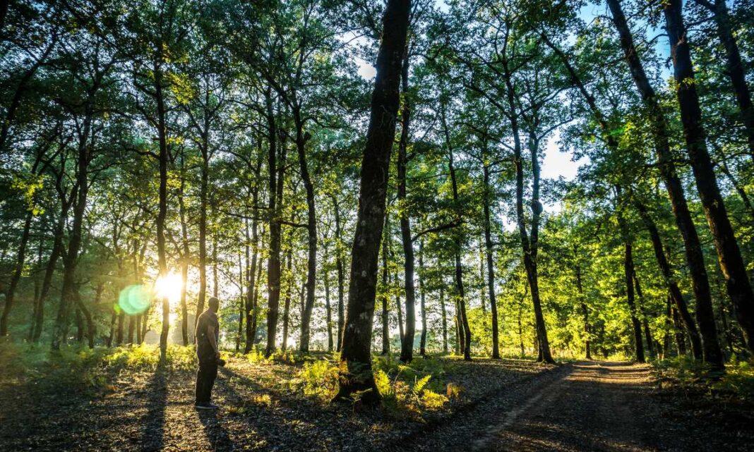 Δάση στην Πελοπόννησο για βόλτες και ποδηλατάδες