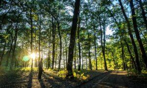 Πελοπόννησος: 4 υπέροχα δάση για βόλτες και ποδηλατάδες!