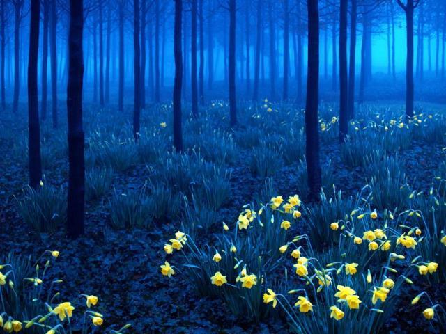 Black Forest, Γερμανία