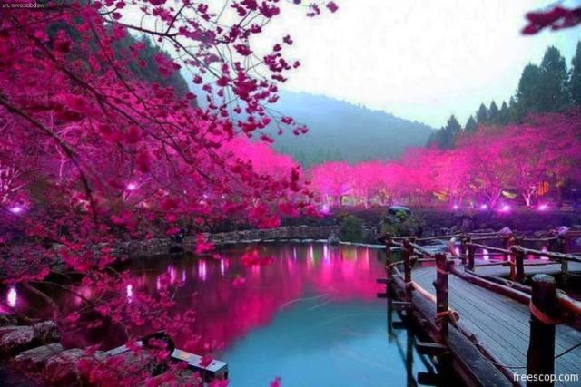 Λίμνη Σακούρα, Ιαπωνία