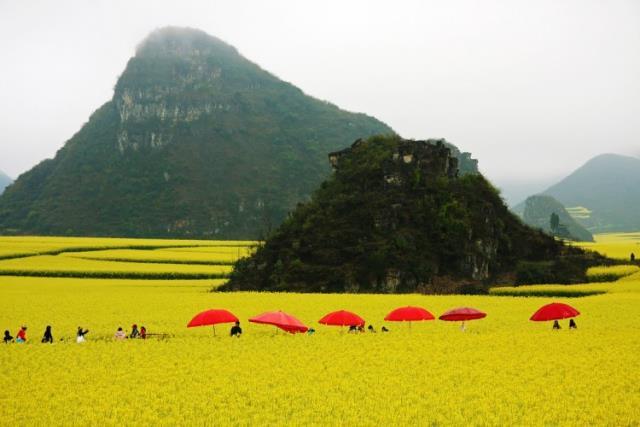 Πεδιάδες με κανόλα, Νότια Κίνα