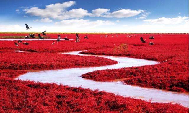 Κόκκινη Παραλία, Κίνα