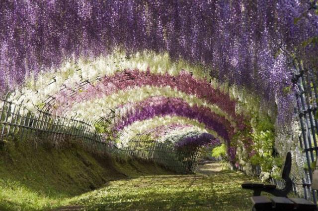 Πάρκο λουλουδιών Ashikaga, Ιαπωνία