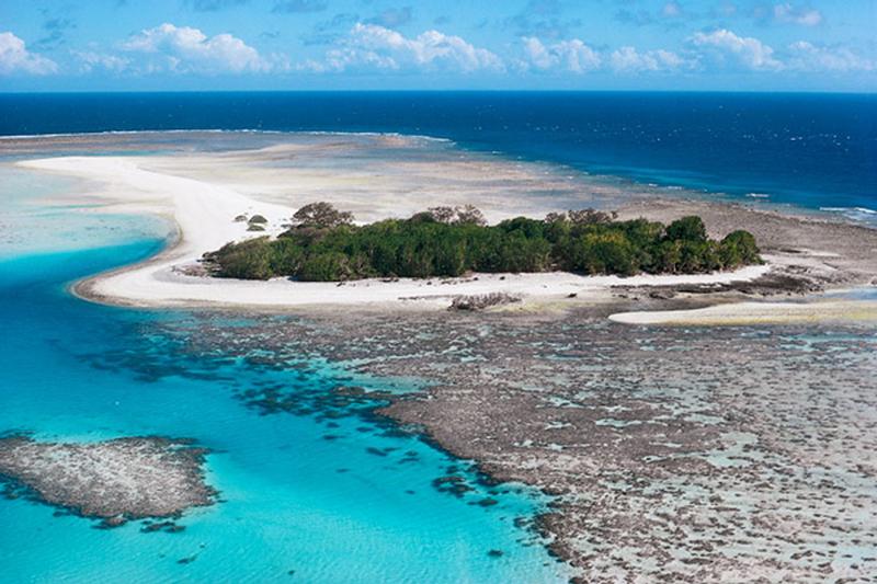 SOS: Ο Μεγάλος Κοραλλιογενής Ύφαλος έχει χάσει τα μισά από τα κοράλλια του!
