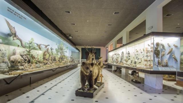 Μουσεία Αθήνα: Μουσείο Γουλανδρή Φυσικής Ιστορίας