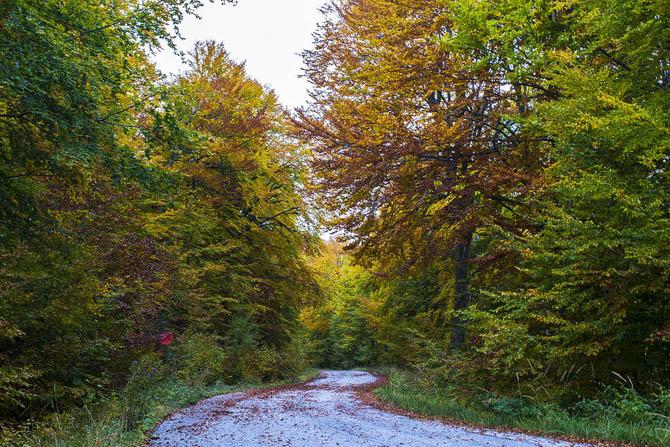 Tαξίδι στα 5 ομορφότερα ελληνικά δάση!