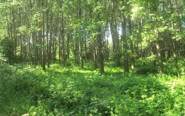 Αποδράστε μαζί μας στα 5 ομορφότερα δάση της Ελλάδας!