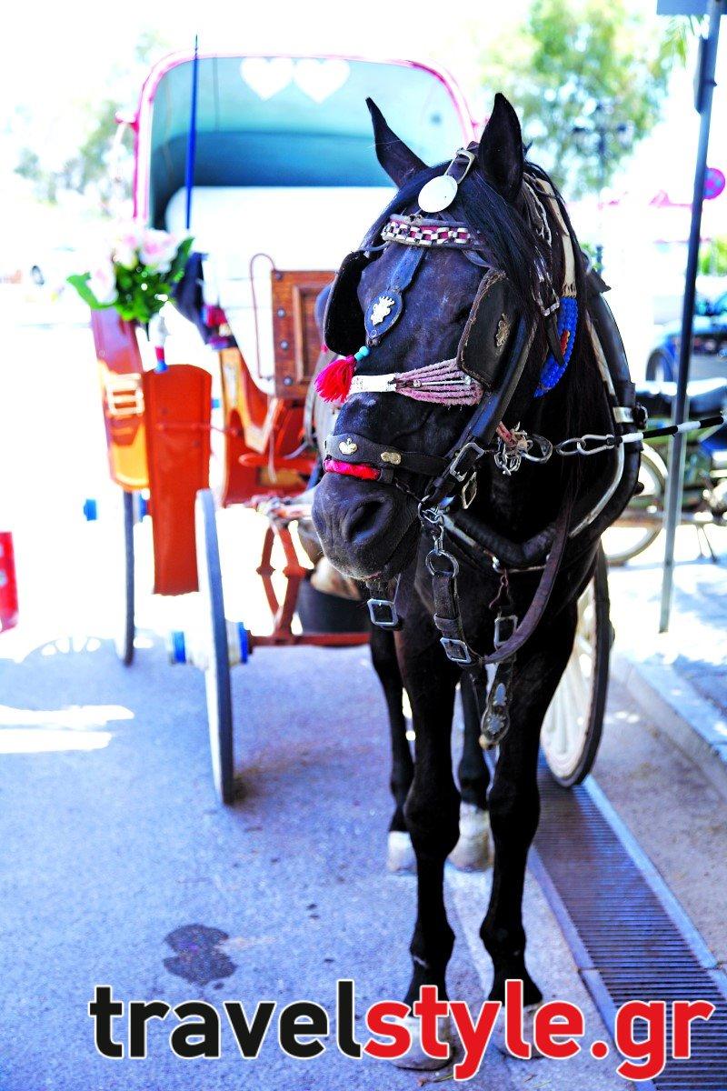 Αίγινα οδηγός: 50 tips και διευθύνσεις από τον Τάσο Δούση για φαγητό,ποτό, παραλίες, αξιοθέατα και διαμονή!