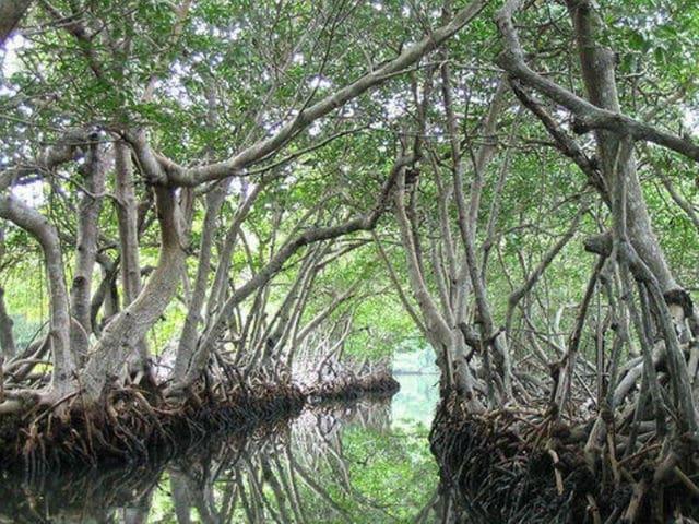 Νησί Ramree