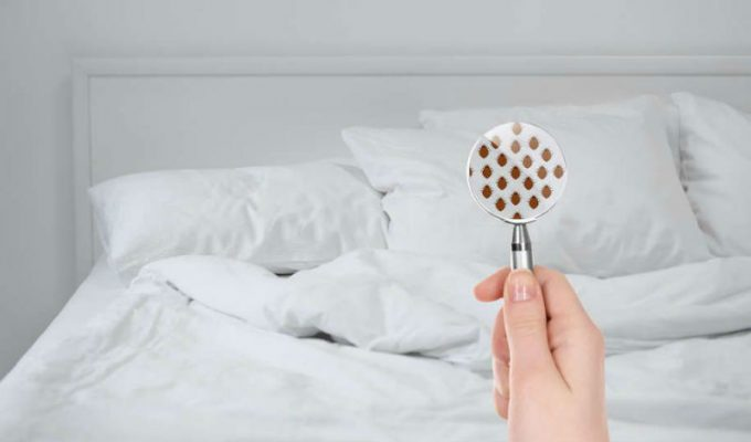 Έχει έντομα το δωμάτιο του ξενοδοχείου σας; Διαπιστώστε το σε 5 μόλις λεπτά