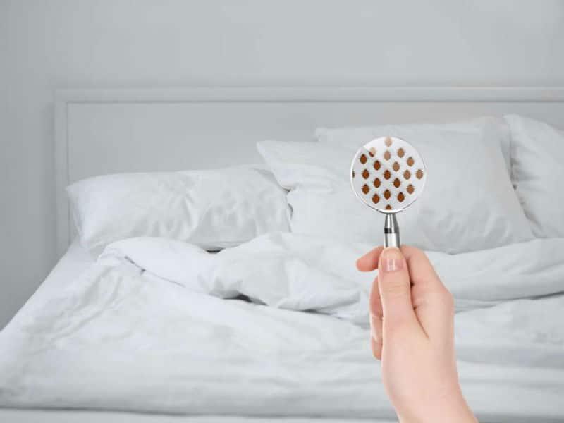 Έχει έντομα το δωμάτιο του ξενοδοχείου σας; Διαπιστώστε το σε 5 μόλις λεπτά (video)