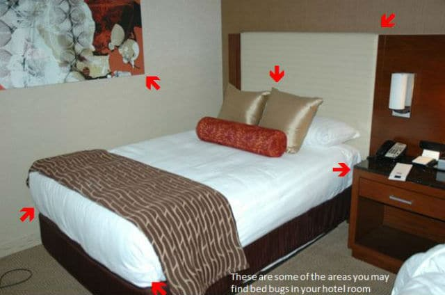Έντομα στο δωμάτιο ξενοδοχείου