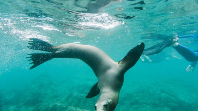 Νησιά Γκαλαπάγκος - υποβρύχια ζωή