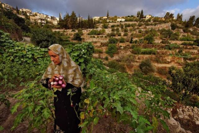 Κτήματα ελιών και σταφυλιών, Παλαιστίνη