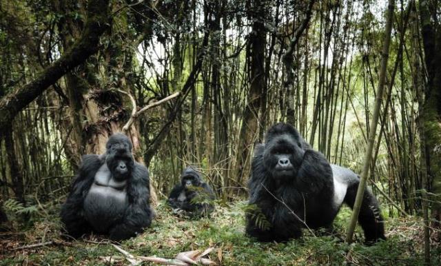 Εθνικό Πάρκο Virunga, Κονγκό