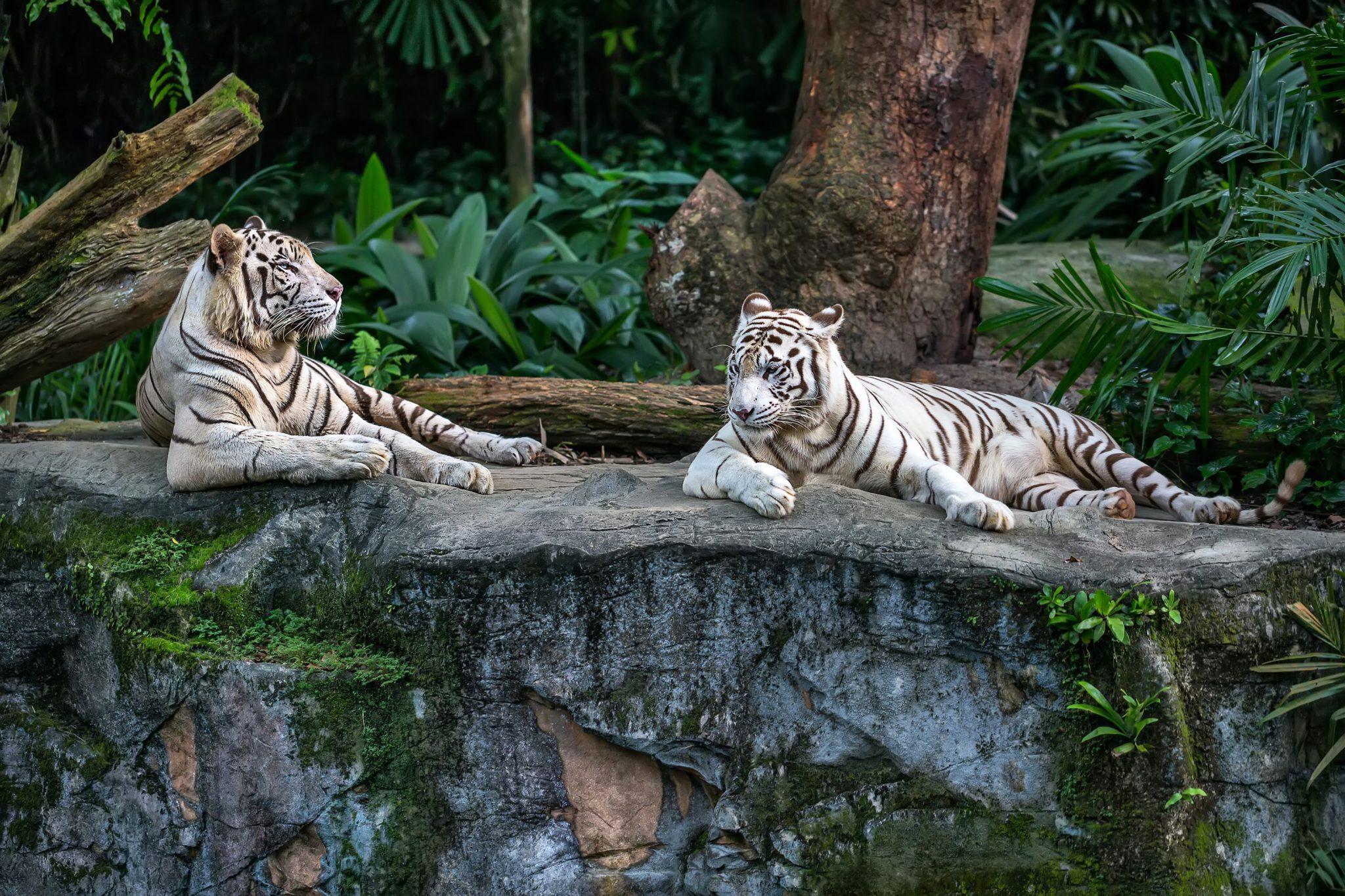 Οι ζωολογικοί κήποι στην Ευρώπη που πρέπει να δεις!