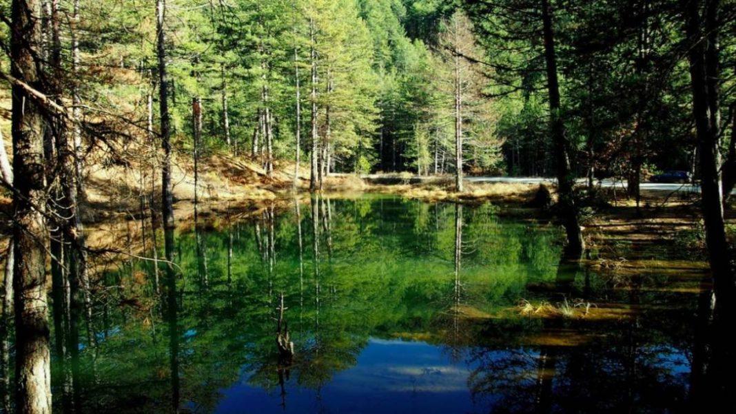 Ζορίκα λίμνη με νούφαρα στο Ζαγόρι