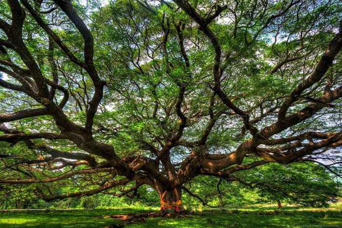 Γνωρίζετε σε ποια σημεία του πλανήτη βρίσκονται τα πιο περίεργα δέντρα- Δείτε photo