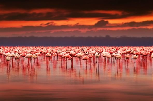 Κένυα- Η λίμνη Nakuru με τα 1.500.000 φλαμίνκο- (Εντυπωσιακό VIDEO)