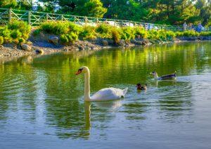 Σε απόσταση αναπνοής από την Αθήνα- Η άγνωστη λίμνη της Πάρνηθας