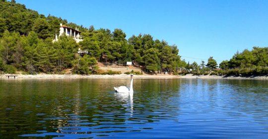 Σε απόσταση αναπνοής από την Αθήνα, η λίμνη που θυμίζει ΑΛΠΕΙΣ!!! Επισκεφτείτε την!!!