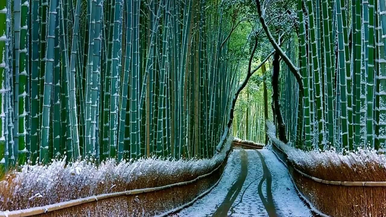 Το Δάσος των Μπαµπού στην Ιαπωνία, ένα από τα πιο εντυπωσιακά στον κόσμο